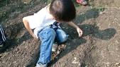 104一甲-有機菜園種黃豆:DSC_0063.JPG