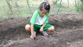104一甲-有機菜園種黃豆:DSC_0026.JPG