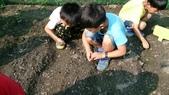104一甲-有機菜園種黃豆:DSC_0064.JPG