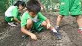 104一甲-有機菜園種黃豆:DSC_0015.JPG