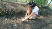 104一甲-有機菜園種黃豆:DSC_0068.JPG