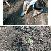 104一甲-有機菜園種黃豆:相簿封面