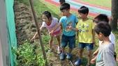 104一甲-有機菜園種黃豆:DSC_0062.JPG