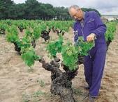 Hnos. Pérez Pascuas, S. L. -Viña Pedrosa-酩諾西班牙葡萄酒:pedrosa_西班牙葡萄酒