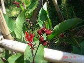 花蓮2日遊-牛山呼庭:牛山呼庭