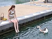 20090919 日月潭半日遊:這是鴨還是鵝?!..牠向我這游過來..我不以為意..結果牠居然啄我大腿耶.@@'