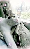 Miu miu貓:17-06-02-12-46-22-109_deco.jpg