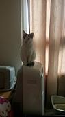 Miu miu貓:DSC_1483.JPG