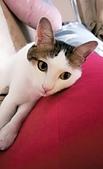Miu miu貓:IMG_20170527_154452.jpg