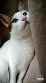 Miu miu貓:17-07-05-17-43-23-873_deco.jpg