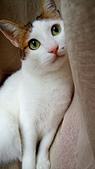 Miu miu貓:DSC_0489.JPG