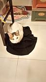 Miu miu貓:DSC_1494.JPG
