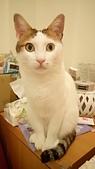 Miu miu貓:DSC_1458.JPG