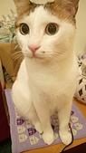 Miu miu貓:DSC_1493.JPG
