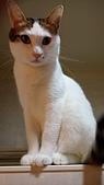 Miu miu貓:DSC_1705.JPG