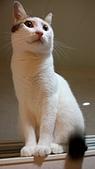 Miu miu貓:DSC_1703.JPG