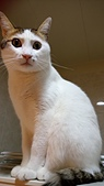 Miu miu貓:DSC_1707.JPG