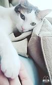 Miu miu貓:17-06-02-12-45-23-933_deco.jpg