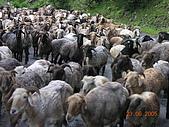 2005 06 北疆 - 動物篇:DSCN2290.JPG