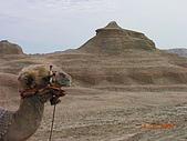 2005 06 北疆 - 動物篇:DSCN0650.JPG