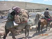 2005 06 北疆 - 動物篇:DSCN1347.JPG