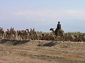 2005 06 北疆 - 動物篇:DSCN0490.JPG
