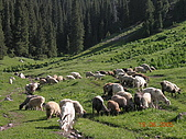 2005 06 北疆 - 動物篇:DSCN1395.JPG