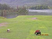 2005 06 北疆 - 動物篇:DSCN0715.JPG