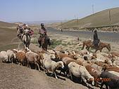 2005 06 北疆 - 動物篇:DSCN1345.JPG