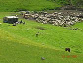 2005 06 北疆 - 動物篇:DSCN2341.JPG