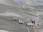 2005 06 北疆 - 動物篇:DSCN1338.JPG