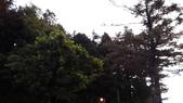 103/6/12阿里山夜未眠:xj2014_06_13_05_02_04.jpg