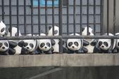紙貓熊在信義公民會館快閃:IMG_2681.JPG