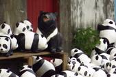 紙貓熊在信義公民會館快閃:IMG_2586.JPG