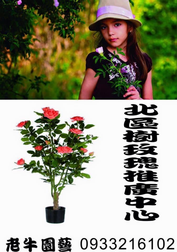 老牛園藝:樹玫瑰-11.jpg