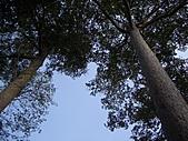 吳哥窟的樹:21.jpg