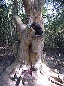 吳哥窟的樹:22.jpg