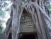 吳哥窟的樹:25.jpg