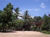 吳哥窟的樹:6.jpg