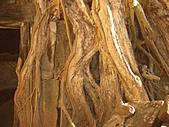 吳哥窟的樹:7.jpg