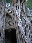 吳哥窟的樹:8.jpg