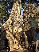 吳哥窟的樹:9.jpg