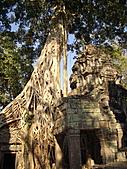 吳哥窟的樹:11.jpg