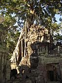 吳哥窟的樹:12.jpg
