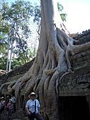 吳哥窟的樹:14.jpg