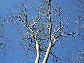 吳哥窟的樹:15.jpg