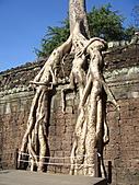 吳哥窟的樹:16.jpg