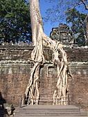 吳哥窟的樹:17.jpg