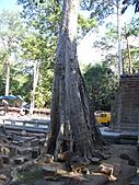 吳哥窟的樹:18.jpg