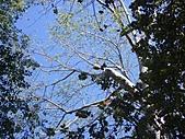 吳哥窟的樹:19.jpg